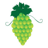Bunches of grapes. Vector Stock Images