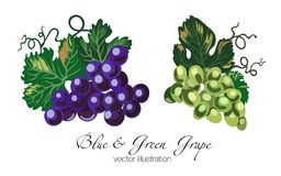 Vector illustration of blue and green grapes stock illustration