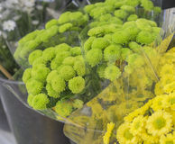 Bunches of Green Flowers Chrysanthemums at Flower Market Royalty Free Stock Images