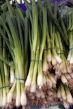 Bunches of green onions Stock Image