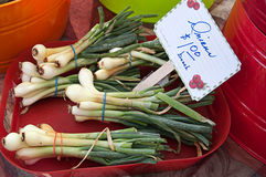 Bunches of Green Onions Royalty Free Stock Photography