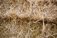 Bunches of hay Stock Image