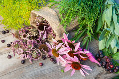 Bunches of healing herbs and coneflowers on wooden plank. Herbal medicine Stock Images