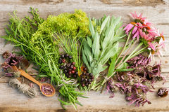 Bunches of healing herbs and coneflowers on wooden plank,top vie Royalty Free Stock Photos