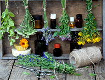 Bunches of healing herbs - mint, yarrow, lavender, clover, hyssop, milfoil, mortar with flowers of calendula and bottles,. Herbal medicine stock images