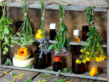 Bunches of healing herbs - mint, yarrow, lavender, clover, hyssop, milfoil, mortar with flowers of calendula and bottles,. Herbal medicine royalty free stock photo