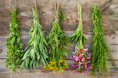 Bunches of healing herbs on wooden wall Royalty Free Stock Photo