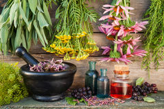 Bunches of healing herbs on wooden wall, mortar, bottles and ber Royalty Free Stock Image