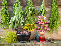 Bunches of healing herbs on wooden wall, mortar with dried plant Stock Photography
