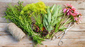 Bunches of herbs, coneflowers, scissors and jute rope Stock Image