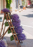 Bunches of lavander in Co Stock Images