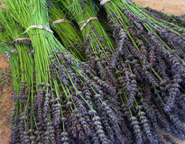 Bunches of Lavender Royalty Free Stock Image