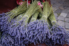 Bunches of lavender Royalty Free Stock Images