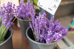 Bunches of lavenders, street market in Munich Royalty Free Stock Images