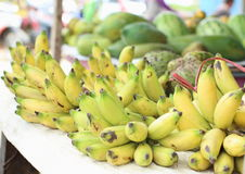 Bunches of Local Rape Bananas. Bunches of yellowish green rape small bananas, also known as Gold Banana or Lady Finger Banana (Musa acuminata Colla) in Royalty Free Stock Photos