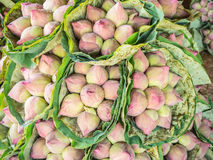 Bunches of lotus Stock Images