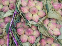 Bunches of lotus Stock Photo