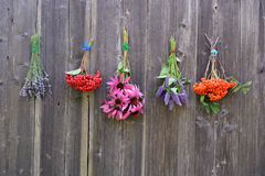 Bunches of medical herbs and berries on wall royalty free stock photography