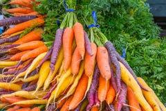 Bunches Organic Rainbow Carrots. Display of bunches of colorful organic rainbow carrots.  Copy space Stock Photo