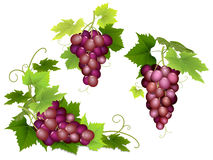 Bunches of pink grapes Royalty Free Stock Photos