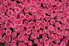 Bunches of pink roses Royalty Free Stock Photo