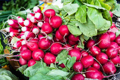 Bunches of radish at city market square Royalty Free Stock Images