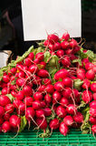 Bunches of radish Stock Photography