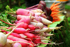 Bunches of radish Stock Photo