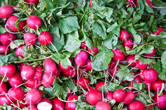 Bunches of Radishes at Farmers Market Royalty Free Stock Photos