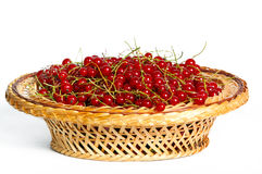 Bunches of red currants in a basket Stock Photo