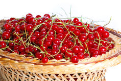 Bunches of red currants in a basket Royalty Free Stock Photos