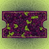Bunches of the red grapes with dew drops. Bunches of the red and purple grapes with dew drops. Vector banner with fresh grapes Royalty Free Stock Photos