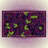 Bunches of the red grapes with dew drops. Bunches of the red and purple grapes with dew drops. Vector banner with fresh grapes Stock Photography