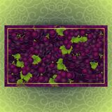 Bunches of the red grapes with dew drops. Bunches of the red and purple grapes with dew drops. Vector banner with fresh grapes Stock Images