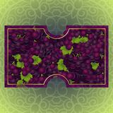 Bunches of the red grapes with dew drops. Bunches of the red and purple grapes with dew drops. Vector banner with fresh grapes Stock Image