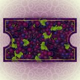 Bunches of the red grapes with dew drops. Bunches of the red and purple grapes with dew drops. Vector banner with fresh grapes Royalty Free Stock Photography