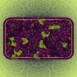 Bunches of the red grapes with dew drops. Bunches of the red and purple grapes with dew drops. Vector banner with fresh grapes Stock Photos