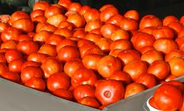 Bunches of Red Ripe Tomatoes Royalty Free Stock Photos