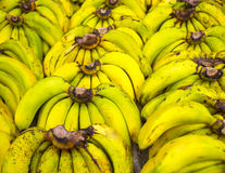Bunches of ripe bananas Royalty Free Stock Photos