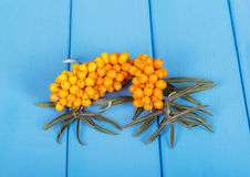 Bunches ripe buckthorn berries on  background of blue painted wood. Royalty Free Stock Photography