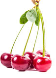 Bunches of ripe juicy cherries Stock Image