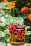 Bunches of ripe red currant in decorative wooden pot, painted in Khokhloma style. The currant is one of the most widespread berry shrubs of the Russian garden Royalty Free Stock Photography