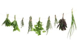 Bunches of rosemary and other herbs hanging royalty free stock image