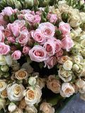 Bunches of roses Stock Images
