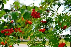 Bunches on a rural street stock photo