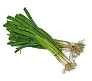 Bunches of Scallions Stock Images