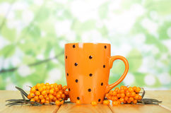 Bunches  sea buckthorn and  cup  tea on the abstract green. Royalty Free Stock Photo