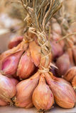 Bunches of Shallots royalty free stock images