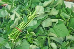 Bunches of spinach Stock Image