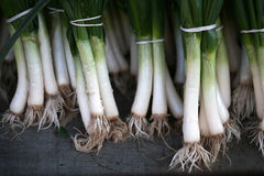Bunches of spring onions Royalty Free Stock Image